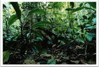 Bung Hatta Forest