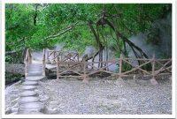 Visite de la réserve naturelle de Rimbo Panti Pasaman