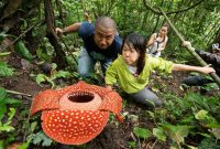 Visiting Bung Hatta Forest Reserve Padang 1
