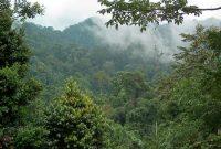 Visiting Gunung Leuser National Park 1