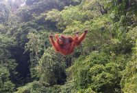 Besuch des Gunung Leuser Nationalparks