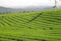 À la découverte du mont Dempo Pagaralam