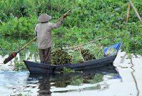 アンバラワを訪問ジャワの田舎の伝統的な生活
