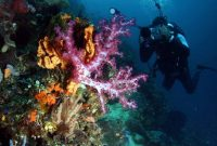 Ambon, Beauty Underwater in Ambon's Sea