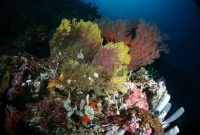 Ambon, Near Hukurila Cave in underwater in Ambon