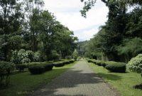 Bogor Botanical Garden 5