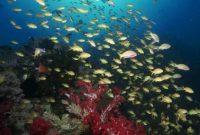 Bunaken underwater scenery a
