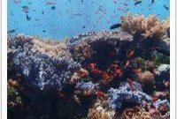 Diving Around Komodo Island 1