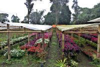 Flower City of Tomohon 3a
