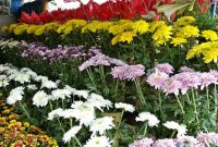 Flower City of Tomohon 4a