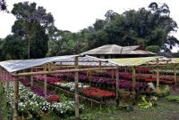 Flower City of Tomohon 5a
