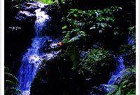 Besuch des Gunung Gede Pangrango Nationalparks