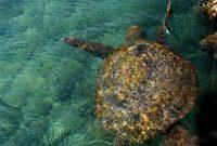 Посещение морского приключения Каримунява в море Ява