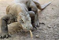 Komodo National Park 2