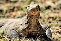 Visitando o Parque Nacional de Komodo
