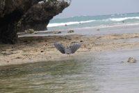 Nusa Dua Beach 3