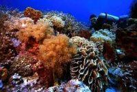 Besuch von Sangalaki, dem Unterwasserparadies
