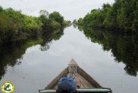 Besuch des Sebangau Nationalparks
