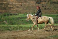 Sumbawa Horse