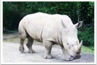 Mengunjungi Taman Safari dan menemukan Hewan Liar Berkeliaran Secara Bebas