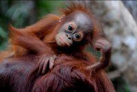 तंजुंग पुताई राष्ट्रीय उद्यान का दौरा