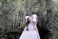 Tanjung Puting National Park 3