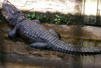Teritip Crocodile Breeding center 3