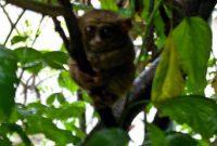 The Tangkoko Nature Reserve 2