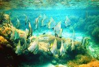 Посещение Сангалаки, подводного рая