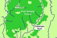 Visitando el Parque Nacional Sebangau