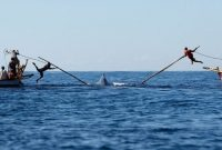 Visiting The Traditional Whale Hunt of Lamalera Lembata on Flores