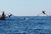 Visite de la chasse traditionnelle aux baleines de Lamalera Lembata à Flores