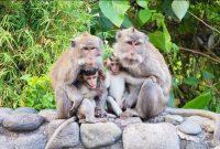 Visiting Ubud Monkey Forest Bali 2