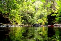 Visiting Wain River Protected Forest