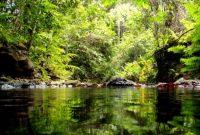 Visitando el bosque protegido del río Wain