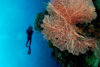Visiting Wakatobi National Marine Park the Underwater Paradise