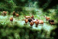 Visiting Alas Purwo National Park