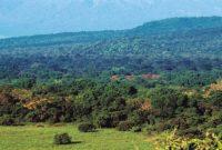 Baluran National Park 2