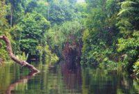 Berbak National Park 2