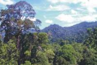 Visiting Bukit Tiga Puluh National Park