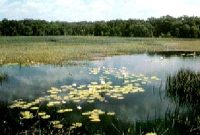 Rawa Aopa Watumohai National Park 3